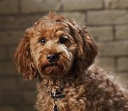 Olive The Shop Dog